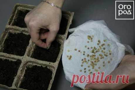 Секреты посадки и выращивания перца в грунте, теплице и дома | Перец, баклажаны (Огород.ru)