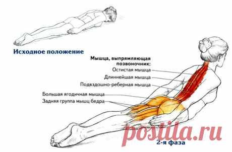 Разгибание спины лежа на животе - лучшее упражнения для красивой осанки   Исходное положение.  Лягте на живот и положите лоб на мат. Вытяните руки вдоль туловища и прижмите ладони к бедрам. Выпрямите руки в локтях. Ноги сведены, носки слегка оттянуты.   Выдох. Последовательно поднимите голову, грудь и верхнюю часть живота от мата, сохраняя положение ног и рук.   Вдох. Медленно опустите туловище и голову в исходное положение. Повторите разгибание спины лежа на животе 10 раз.