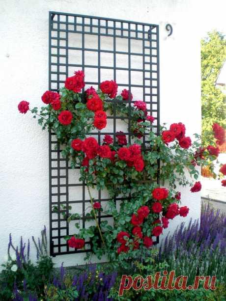40 самых простых опор для цветов, которые можно построить за выходные | Живу за городом