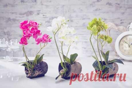 Ухаживаем за орхидеями в домашних условиях — Полезные советы