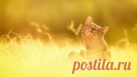 Солнечные кошки | ТАЙНЫ ПЛАНЕТЫ ЗЕМЛЯ