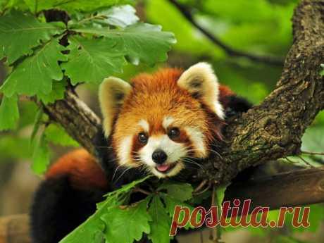Животный мир Японии – самые интересные виды | nashi-pitomcy.ru