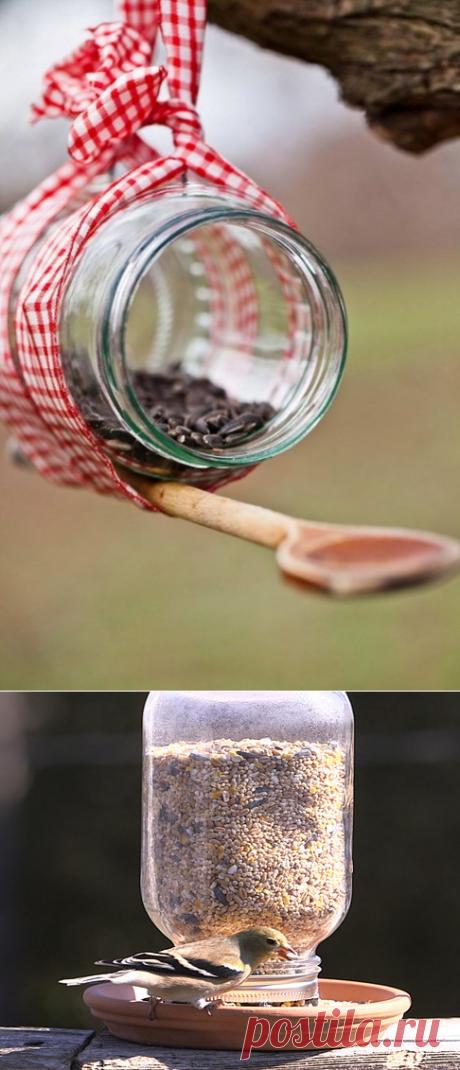 Привлечение птиц для борьбы с насекомыми и гусеницами