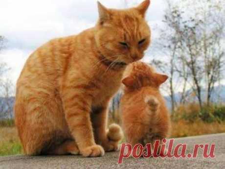 Пусть всегда будет МАМА!!!!)))