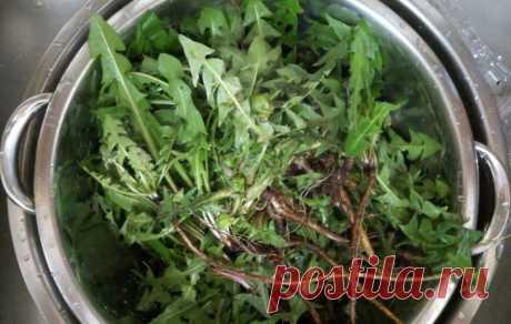10 лучших трав для похудения и выведения токсинов