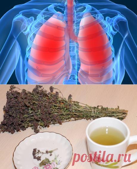 Как избавиться от загрязнения легких — Делимся советами