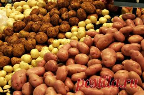 Правила зимнего хранения картошки: в доме и в квартире — Полезные советы