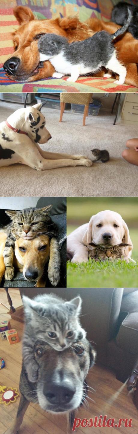 20 примеров очаровательной дружбы котов и собак)))