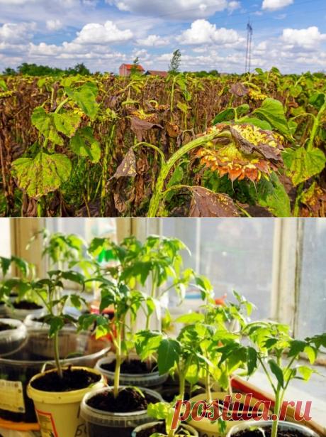 Как использовать йод в саду и огороде – инструкция по применению йода на участке