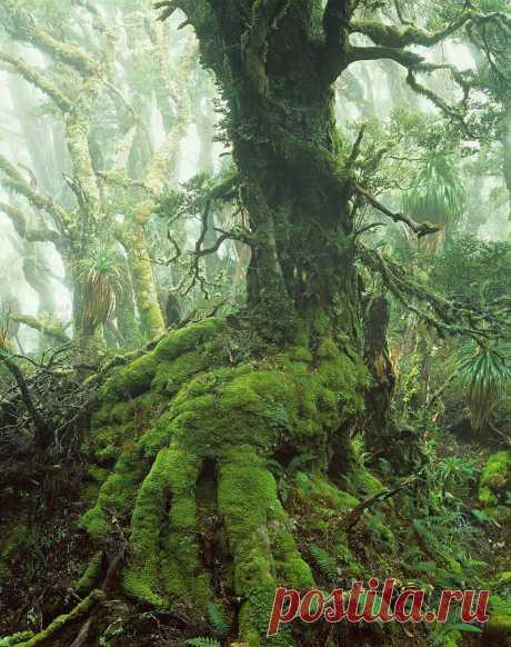 Первобытная красота Тасмании (Австралия)
