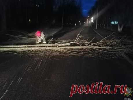В Витебской области ночная буря валила деревья. Без света остались почти 300 населенных пунктов - grodno24.ru