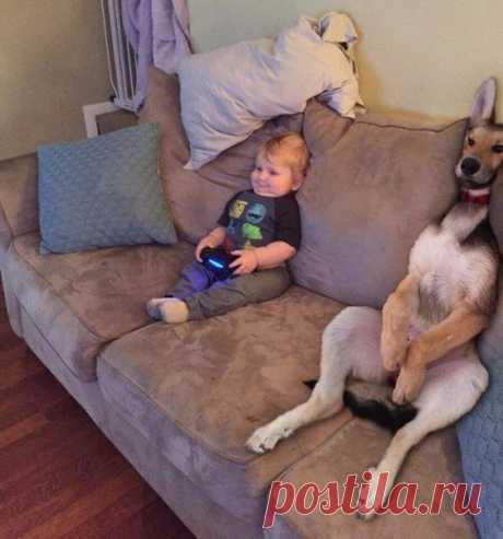 Хорошо зафиксированные ребенок и собака в постоянном присмотре не нуждаются)))