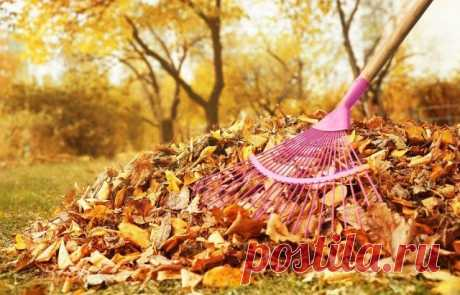 ¿Si es necesario arreglar los restos vegetales del jardín y la huerta en otoño?