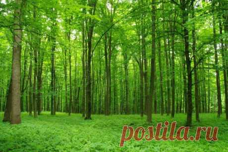 Лес во сне: к чему снится лес и что это значит