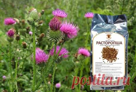 Esta receta única ayudará sanar podzheludochnuyu en un dos por tres. ¡Los medios más eficaces públicos y ningunas medicinas! - es útil Saber
