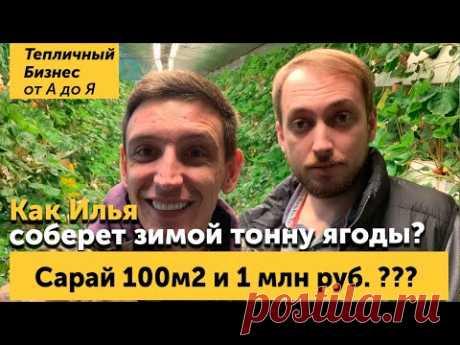 Сарай который приносит миллион? Илья Патиев и его секретная лаборатория.
