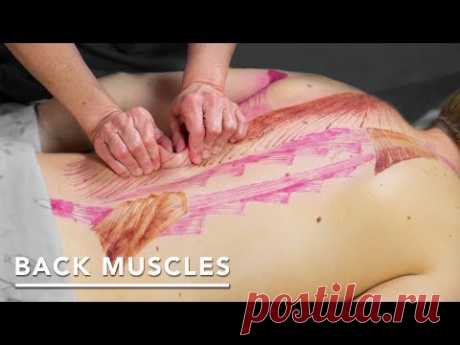 The 3 Deep Back Muscle Layers