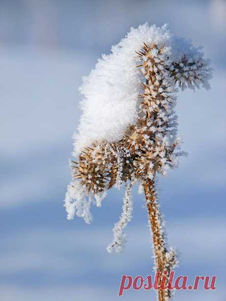 Лошадка.Сухая трава покрытая снегом и инеем.