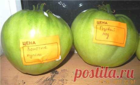 "Томат ""Золотые купола"": описание сорта, характеристики помидоров, фото"