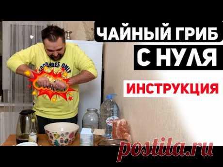 Чайный Гриб с Нуля - Инструкция
