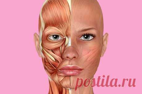 Как сохранить четкий овал лица? Просто, быстро, эффективно