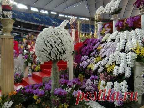 Фестиваль орхидей в Японии
