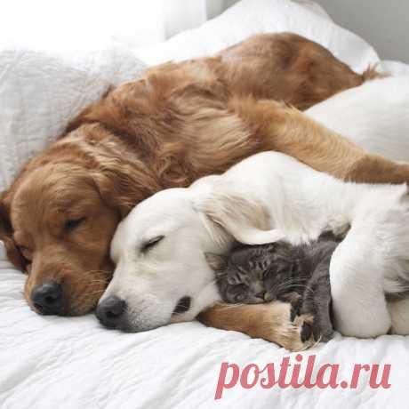 Вместе уютнее и теплее!