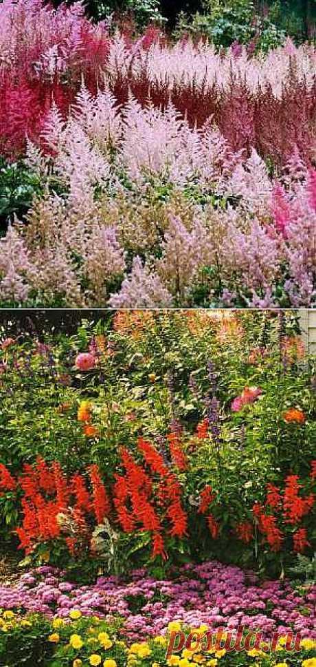 Красивые цветы на даче -подробно о посадке и уходе: Клумба перед домом - 2012elena@bk.ru - Почта Mail.Ru