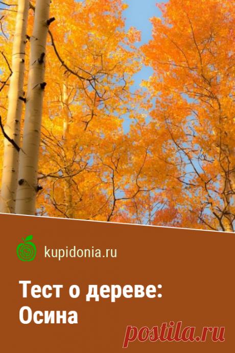 Тест о дереве: Осина. Интересный тест об осине из серии тестов о деревьях. Проверьте свои знания!