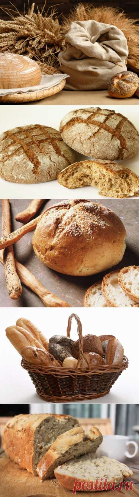 Какой хлеб самый полезный? | Среда обитания