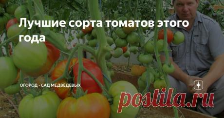 Лучшие сорта томатов этого года Здравствуйте дорогие огородники! Меня зовут Валерий Медведев,  я  живу  в Ивановской области (средняя полоса России) Считаю, что томат занимает в огороде привилегированное место. Под него строят теплицы, создают лучшие условия и ухаживают на протяжении всего сезона, начиная с выращивания рассады.