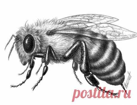 Рисуем пчелу — Сделай сам, идеи для творчества - DIY Ideas