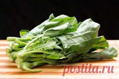 Кай-лан - что это за капуста, как ее выращивать и употреблять Капуста кай-лан особеннсоти выращивания, употребления, состав, полезные свойства, рецепты, внешний вид, фото, противопоказания