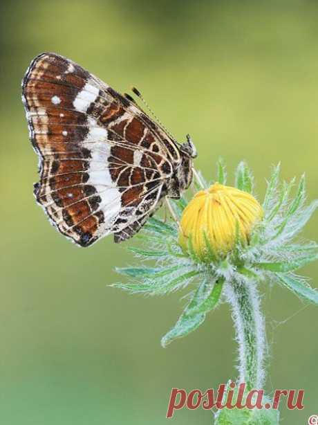 Бабочка-лето Прощальным приветом Душу тревожит-волнует до слёз. Август-художник рисует портреты, Кистью умелой снимая секреты С притихших пугливо осин и берёз.