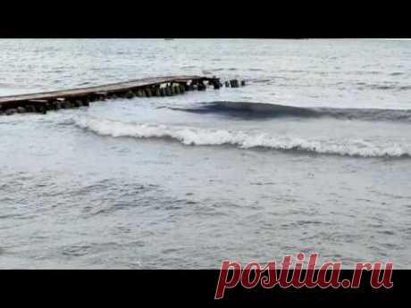 Море, чайка - YouTube