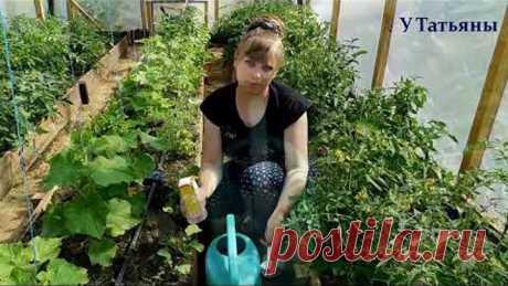 СОДА спасатель вашего огорода! Пищевая сода подкормка для огурцов, томатов и других растений