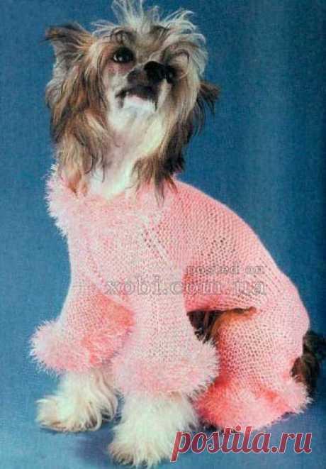 розовый комбинезон для собачки
