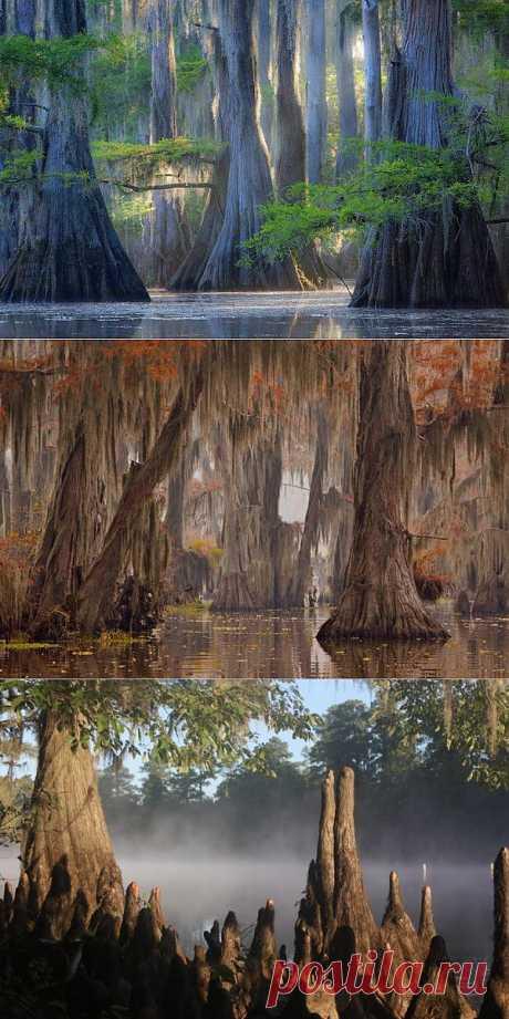 Мистическое озеро Каддо - 25 фото.