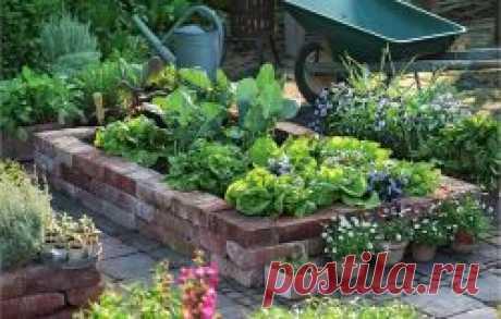 Схема посадки овощей на огороде: правила севооборота и особенности совместных посадок