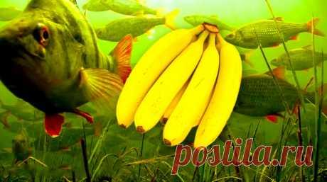 Банановое тесто для рыбалки своими руками | Блоги о даче и огороде, рецептах, красоте и правильном питании, рыбалке, ремонте и интерьере