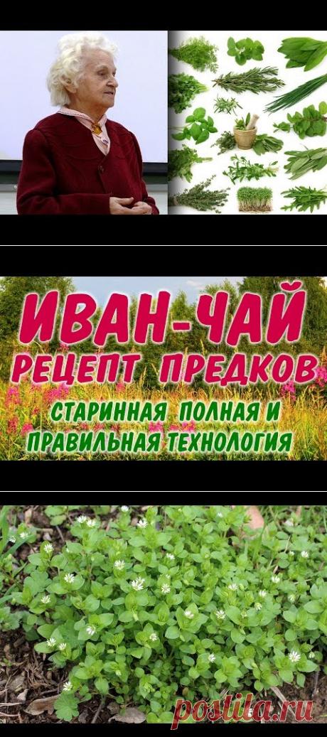 Редчайшие Знания и Советы Сибирской Травницы - YouTube