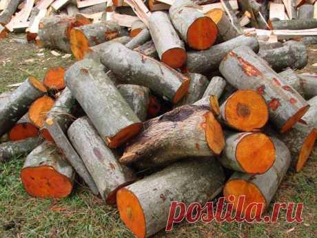 Какими дровами лучше топить дом. Какими дровами лучше топить печь