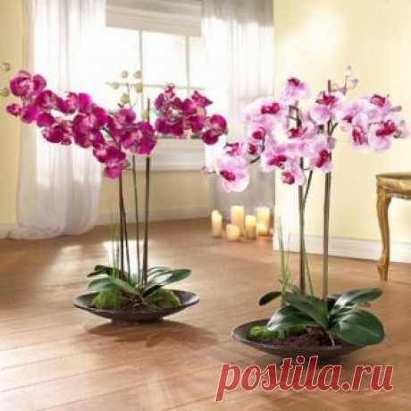 Магическое значение орхидеи в вашем доме. Вы даже не догадываетесь, то она может принести