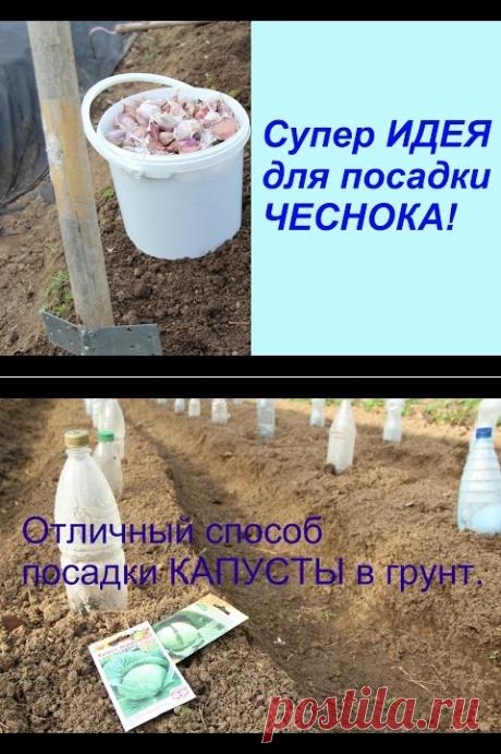 (10) Супер ИДЕЯ для посадки ЧЕСНОКА! - YouTube