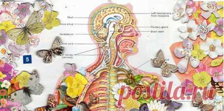 Если ухудшился слух, то ослабились почки: Рекомендации восточной медицины по очищению почек Почки необходимо беречь, поддерживать их здоровье, периодически очищать. От состояния почек зависят долголетие и активность человека, его внешний вид, душевное