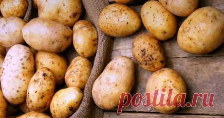 Вот как выращивают картошку в Финляндии - есть чему поучиться!  Не знаю, то ли земли финнам не хватает, то ли просто считают, что так удобнее, но они выращивают картошку в мешках. И если им верить, то собирают хороший урожай при любой погоде и в любой год.  Чтобы…