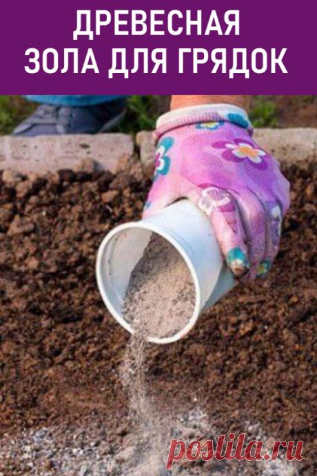 Древесная зола для грядок. Древесная зола как удобрение используется уже давно. Это вещество богато различными микроэлементами, необходимыми для роста растений. Давайте разберемся, как правильно применять пепел на участке. #дача #огород #грядки #древеснаязола #пепелдлягрядок