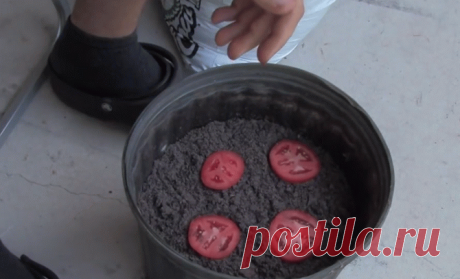 Он положил 4 ломтика помидора в емкость с почвой. Вот что произошло через 12 дней… ~