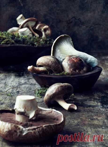 How to salt mushrooms? 6 most tasty recipes | Tasty recipes