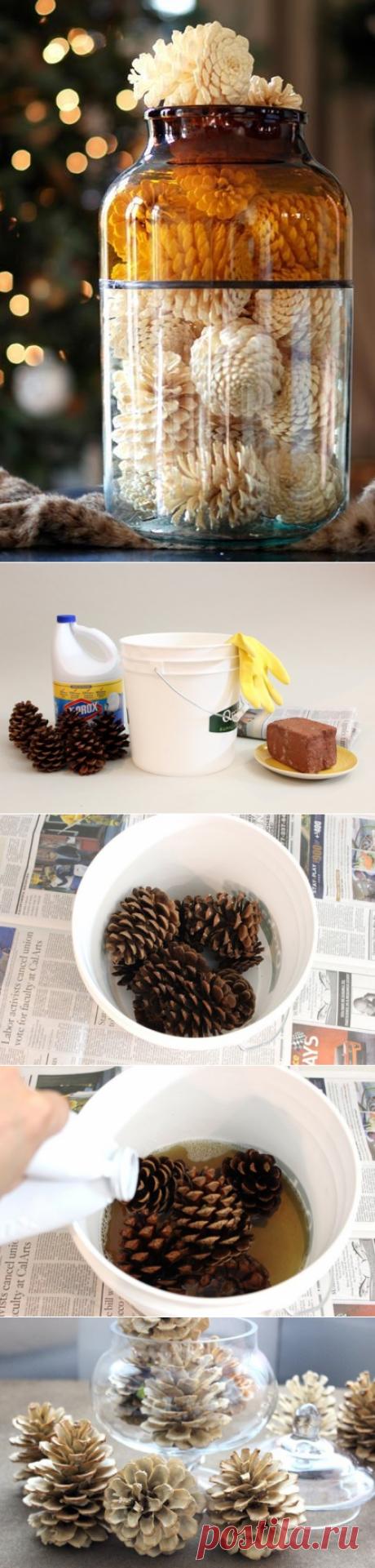 We bleach pine cones